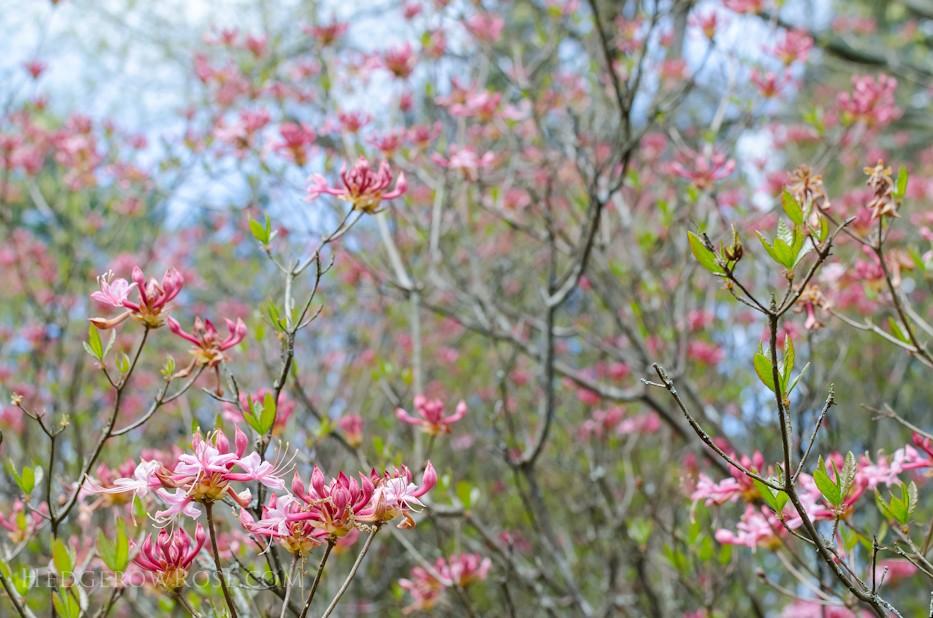Biltmore Blooms - 18