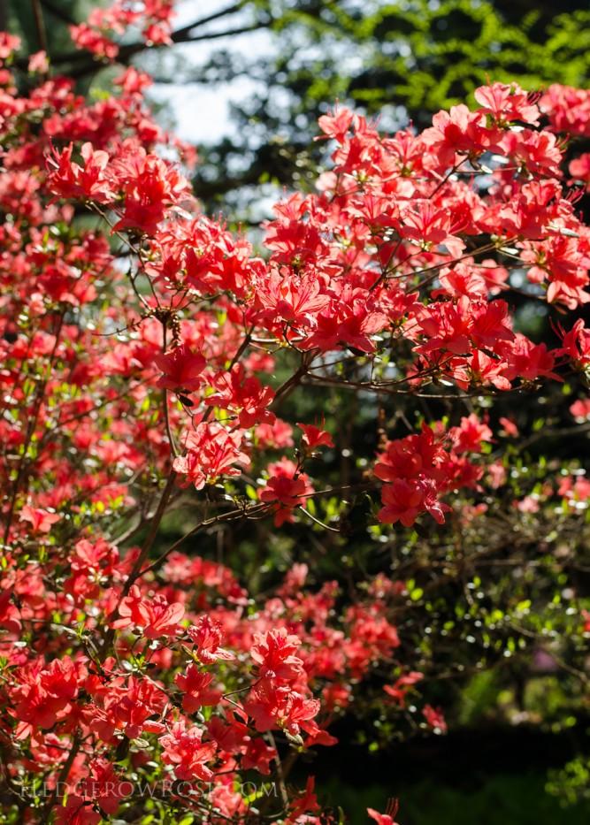 Biltmore Blooms - 19