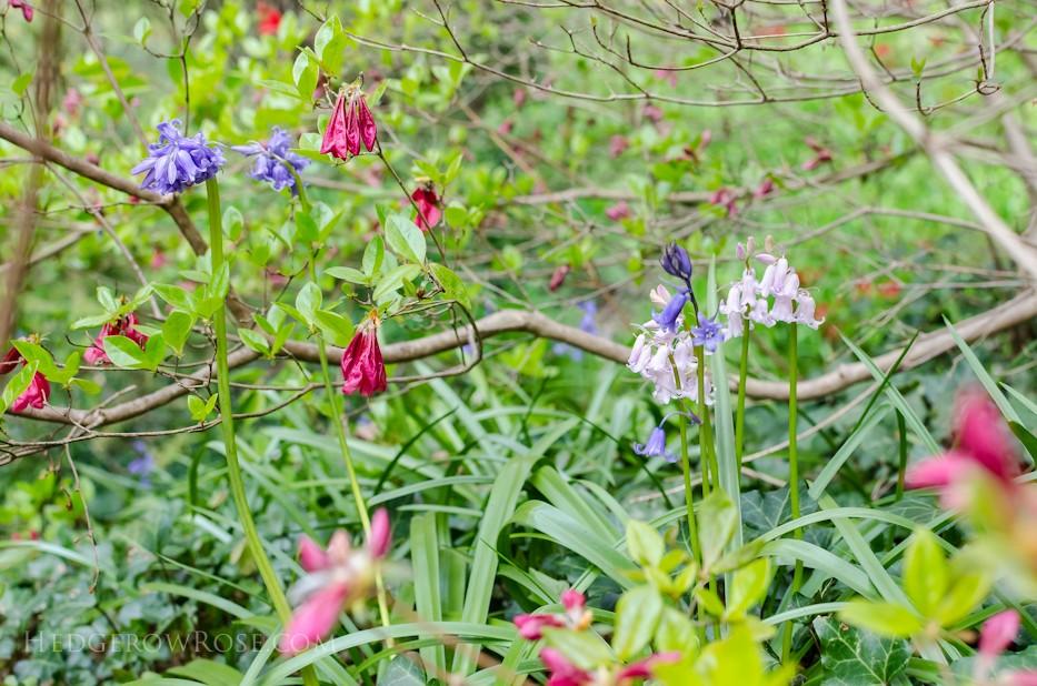 Biltmore Blooms - 20