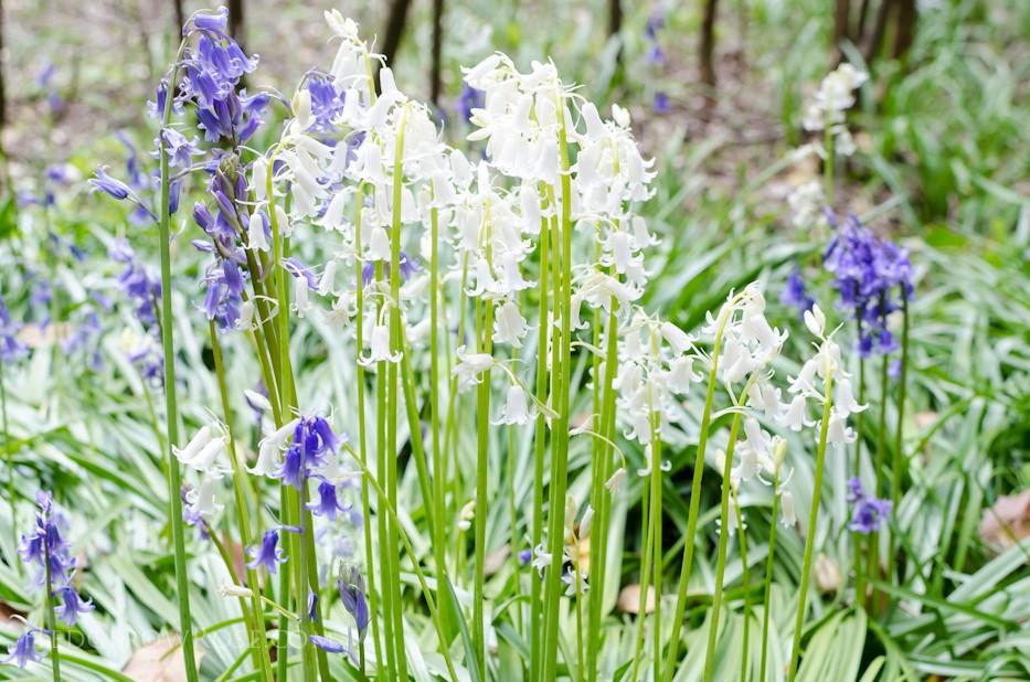 Biltmore Blooms - 21