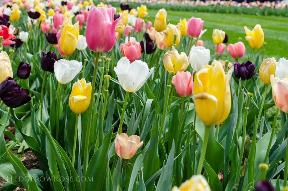 Biltmore Blooms - 4