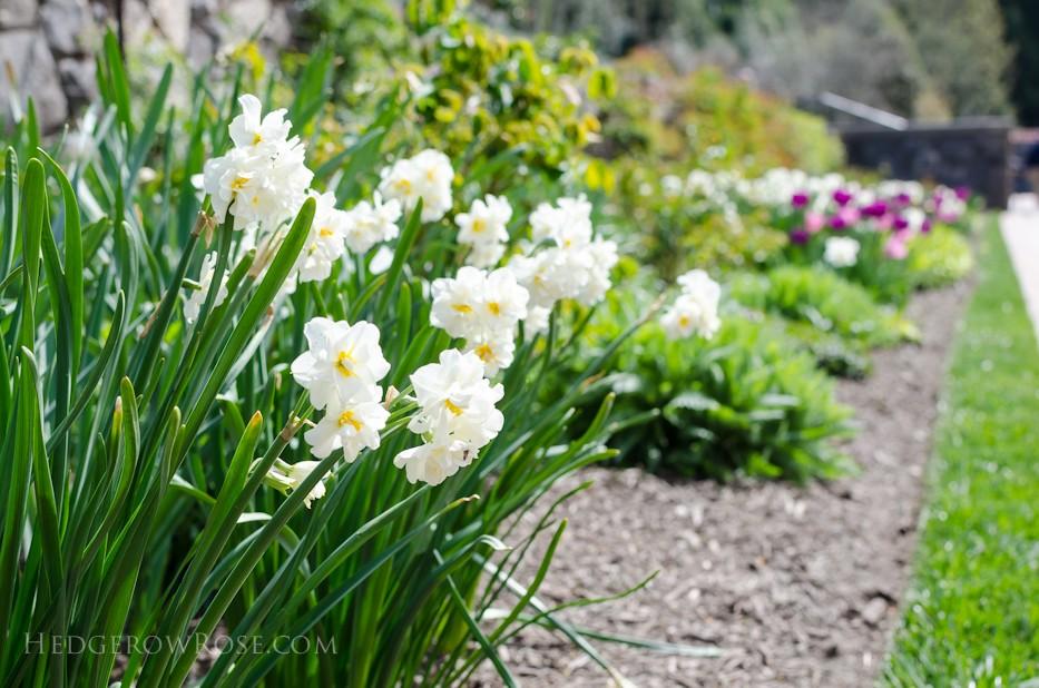 Biltmore Blooms - 9