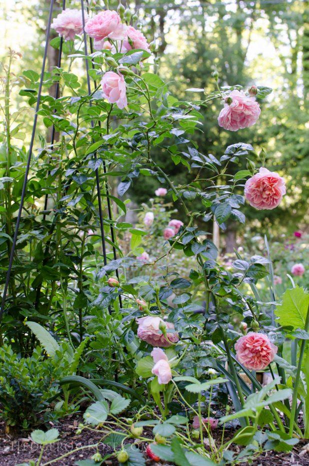 garden 5-17-01