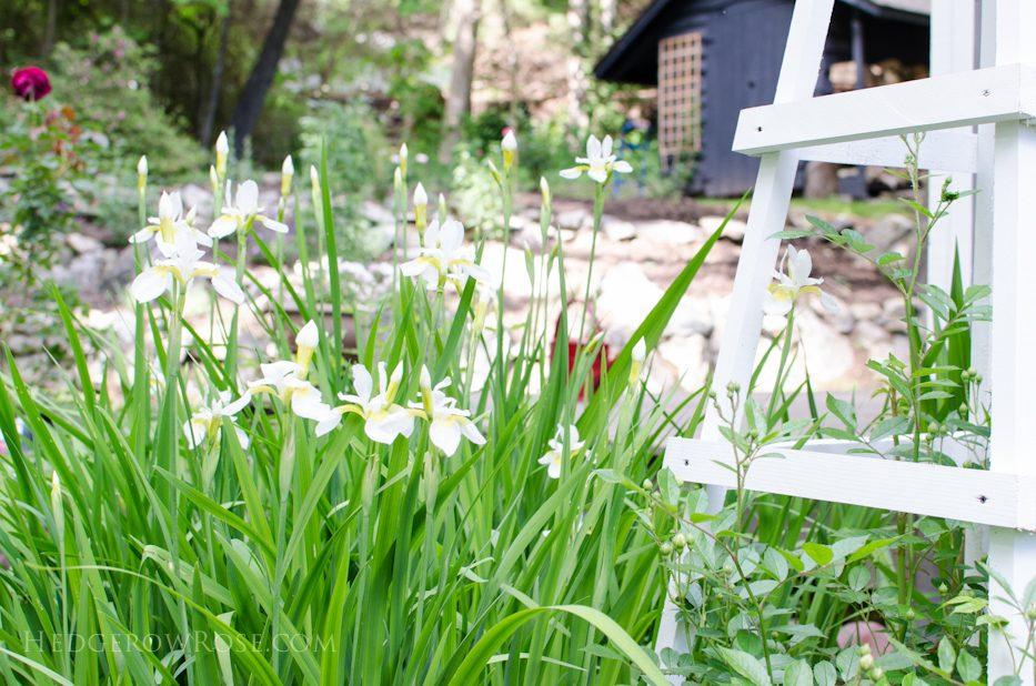 garden 5-17-13