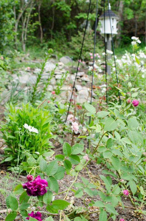 garden 5-17-15