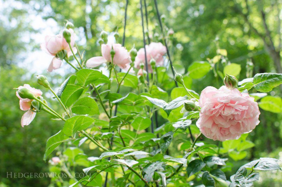 garden 5-17-18