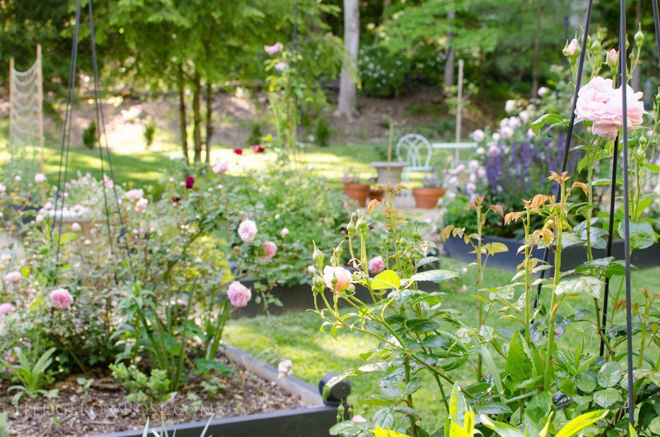 garden 5-17-2