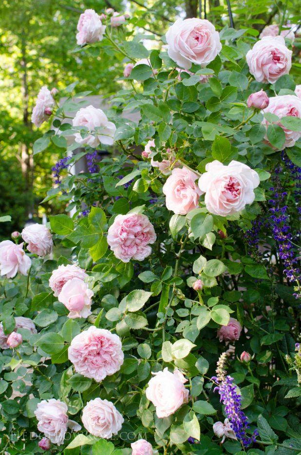 garden 5-17-21