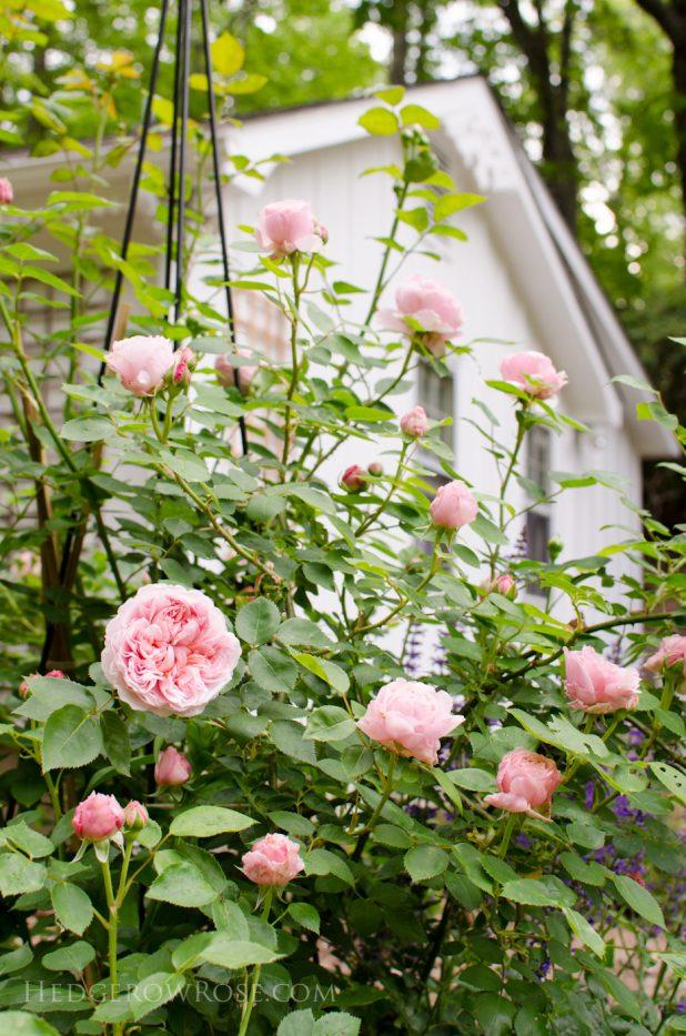 garden 5-17-31