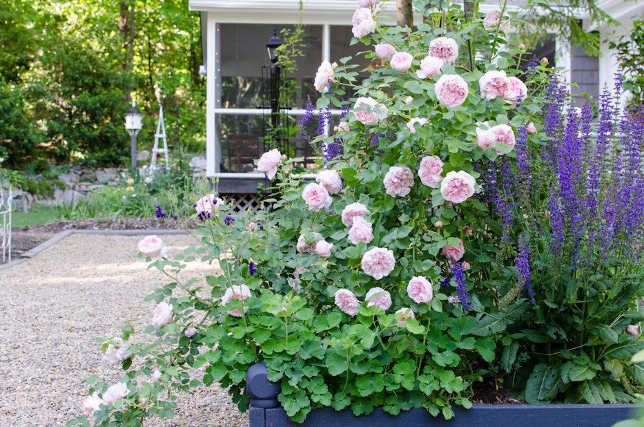 garden 5-17-6