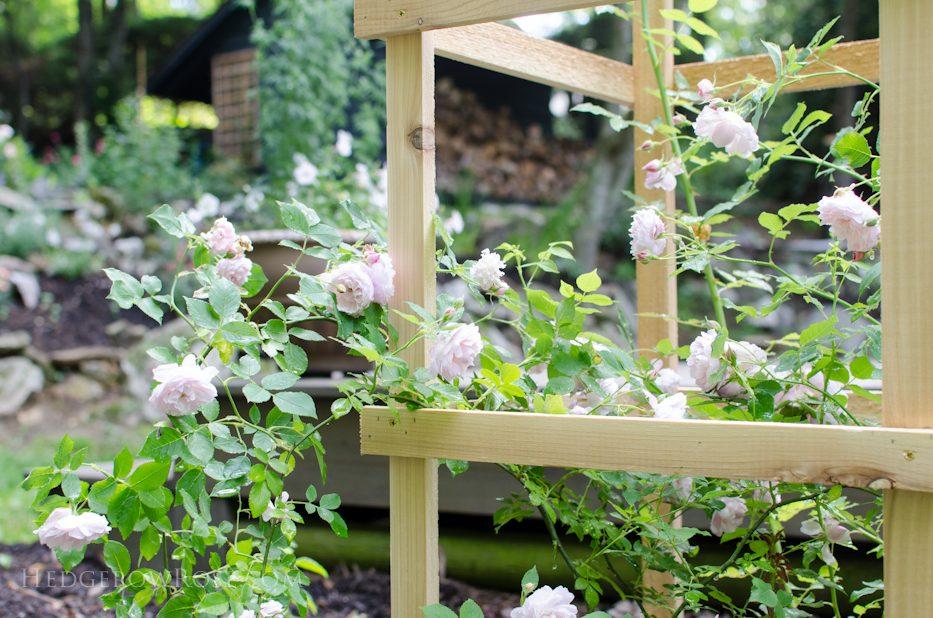 Cedar Rose Support 6-8-2