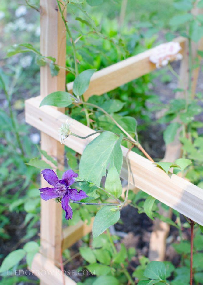 Cedar Rose Support