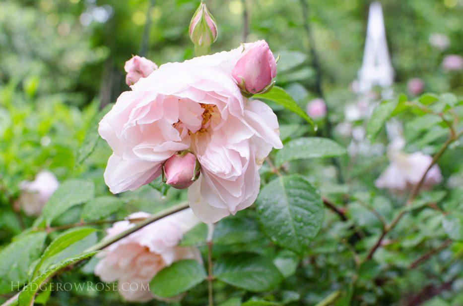 Generous Gardener 6-8-1