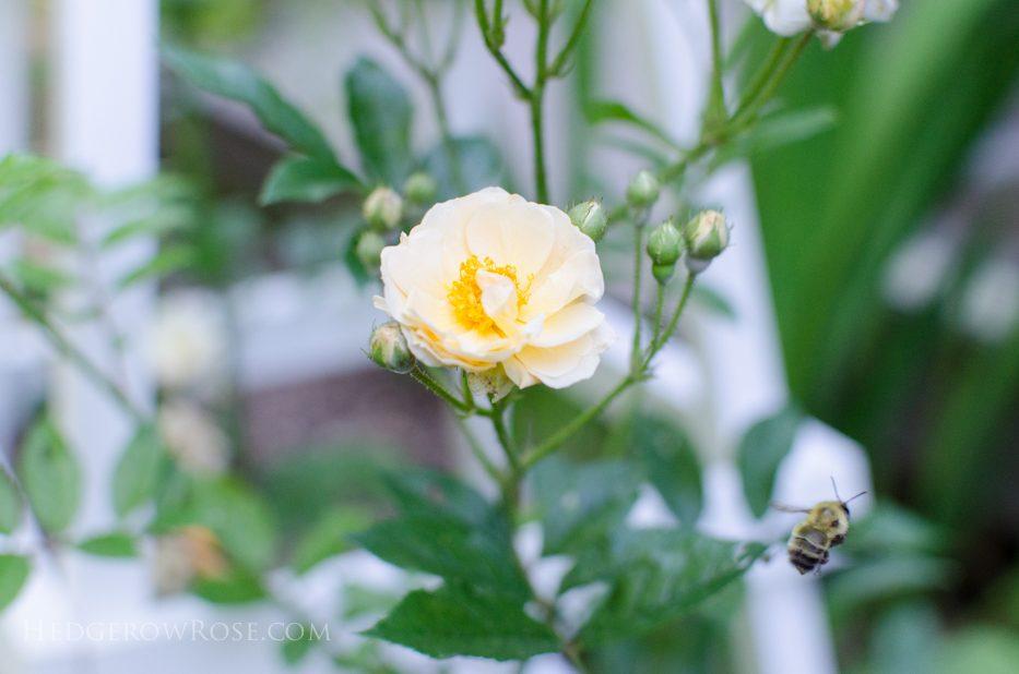 ghislaine and bee
